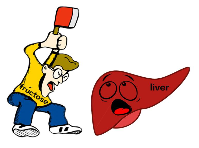 fructose-damaging-the-liver