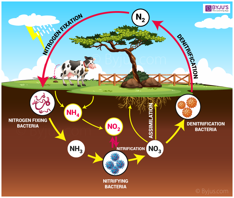 Nitrogen-cycle2