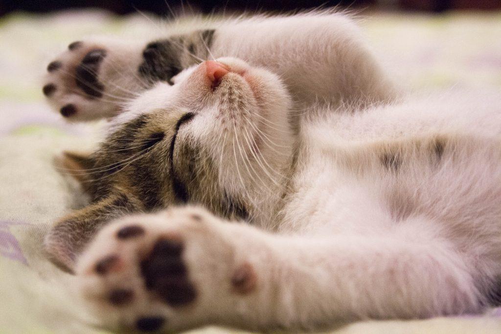 animal-cat-face-close-up-416160